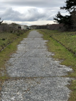 Old access road near the main beach bunker. Spooky.